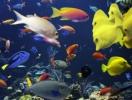 Planet Neptun Aquarium