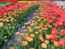 Tulip Festival on Elagin Island