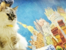Republic of Cats | St-Petersburg Guide
